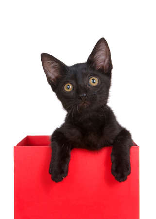 Black kitten sitting in a red box looking slightly to viewers left, paws over the edge of the box. Isolated on white