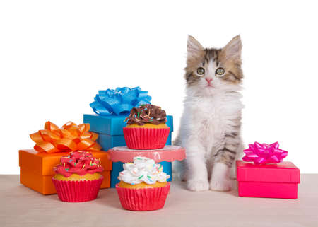 Norwegian Forrest Cat kitten sitting on a light wood floor next to a small pedestal table with a chocolate frosted cupcake, surrounded by presents and more cupcakes. Comical birthday scene. Imagens