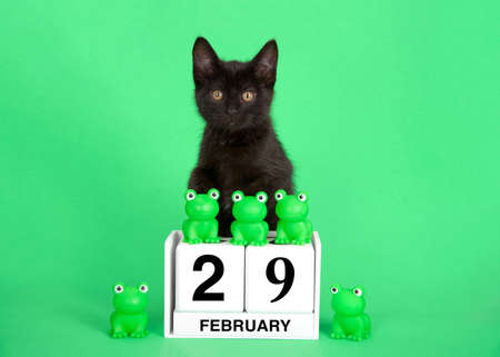Adorable black kitten perched on calendar blocks with Holiday date for Leap Year, February 29th. Green frogs on top and beside date. Green background.