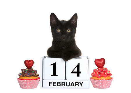 Black kitten relaxed laying on calendar blocks with Holiday date for Valentines Day, February 14. Chocolate and strawberry frosted vanilla cup cakes on each side with red hearts on top. isolated
