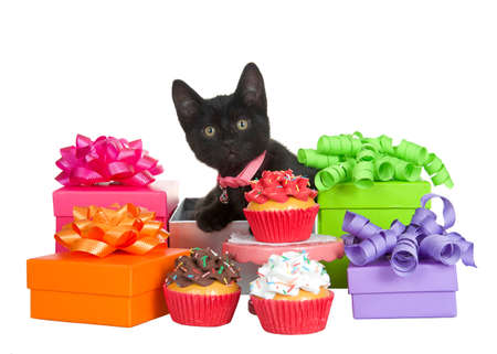 Adorable black kitten wearing a pink collar with bell sitting in a present box surrounded by colorful presents with festive bows, cupcake on pedestal and cupcakes on floor. Isolated on white