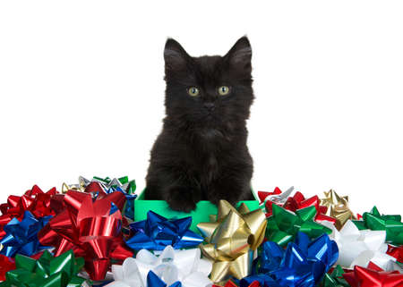 Cute black kitten paws on side of a green box looking directly at viewer, surrounded by many colorful bows. Isolated on white Imagens