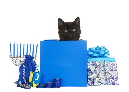 Adorable black kitten peaking out of a blue Hanukkah present with dreidel, menorah, coins and other presents surrounding. Isolated on white background. Animal antics fun holiday theme.