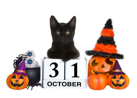 Adorable black kitten relaxed laying on calendar blocks with Holiday date for Halloween, October 31. Surrounded by pumpkin jack-o-lanterns wearing witches hats and cauldron of eye balls. Isolated Imagens