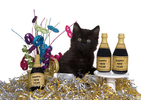 Adorable black kitten sitting in silver box surrounded by silver and gold confetti, miniature bottles of wine with Happy New Years Labels. Isolated on white.