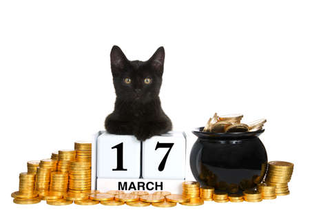 Adorable black kitten relaxed laying on calendar blocks with Holiday date for Saint Patrick's Day, March 17th. Surrounded by piles of gold coins and a pot of gold.