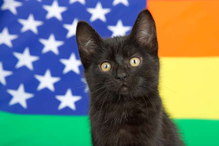 Portrait of a cute black kitten with yellow eyes looking at viewer, Rainbow Gay Pride American flag in background.