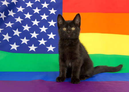 Adorable black kitten with yellow eyes sitting on American Rainbow Gay Pride flag, looking at viewer.