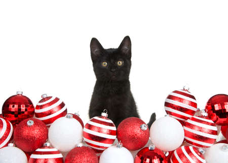 Adorable black kitten peaking out from behind piled tree ornaments in bright red and white, isolated on white.