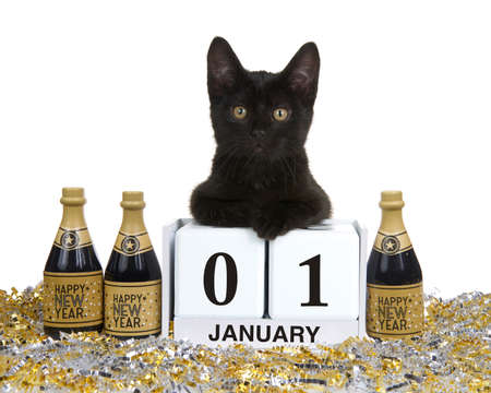 Adorable black kitten relaxed laying on calendar blocks with Holiday date for New Years, January 01. Isolated on white Imagens