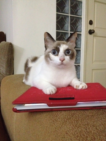 eye: Big blue eyed cat