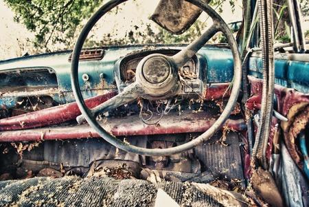cat steering Stock Photo - 13619537