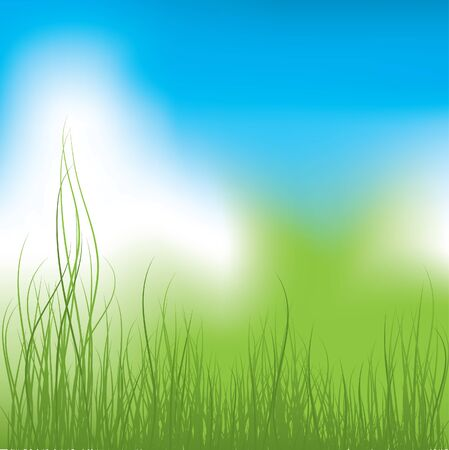 Green Grass and blue sky. Vector illustration Vector