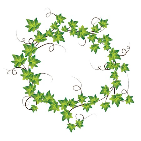 bordure vigne: Lierre vert. Illustration