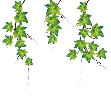 クライマー: 緑のツタ。図  イラスト・ベクター素材