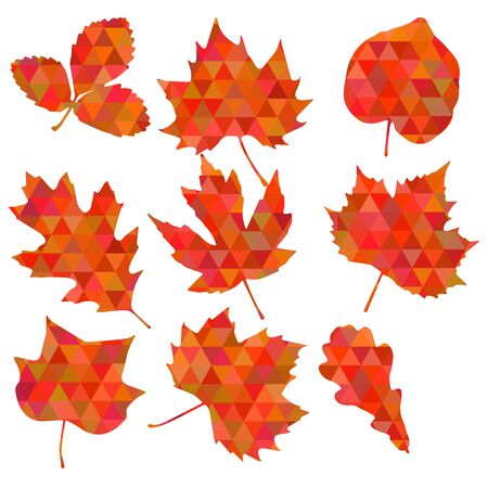 Colorful leaf background, eps10 vector Illustration