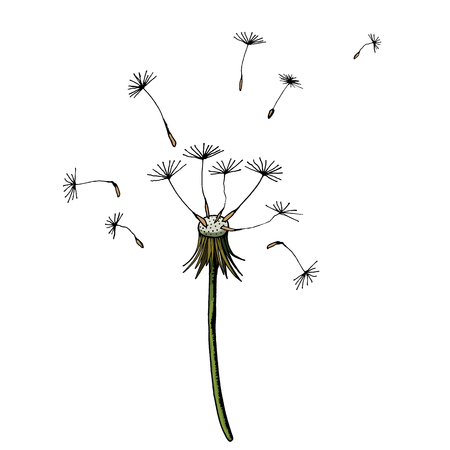 Vector Dandelion blowing silhouette. Flying blow dandelion buds black outdoor decoration on white. Illustration