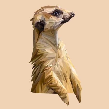 kalahari desert: Mongoose animal low poly design. Triangle vector illustration.