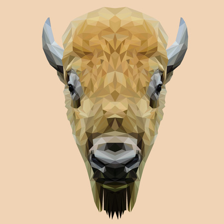 bison: Bison animal low poly design. Triangle vector illustration.