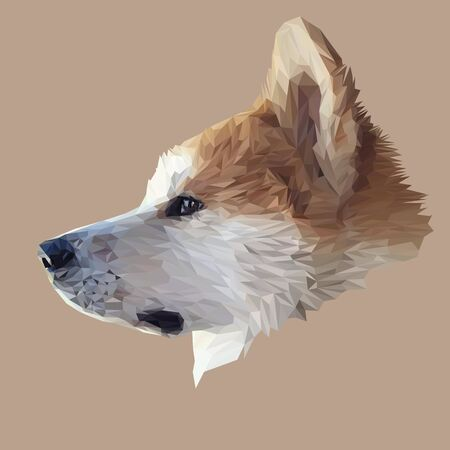 akita: Akita Inu dog animal low poly design. Triangle vector illustration. Illustration