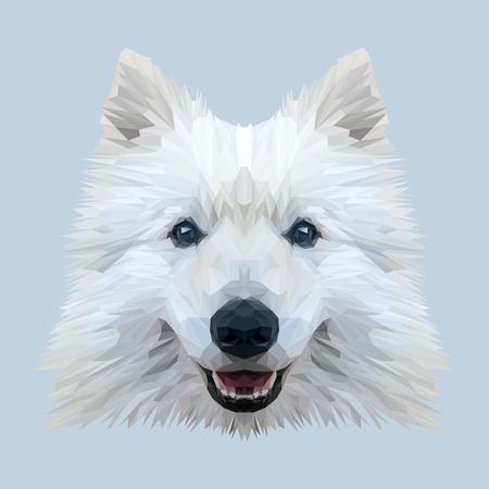 samoyed: White Samoyed dog animal low poly design. Triangle vector illustration.