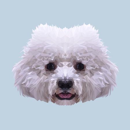 frise: White Bichon Frise dog animal low poly design. Triangle vector illustration.