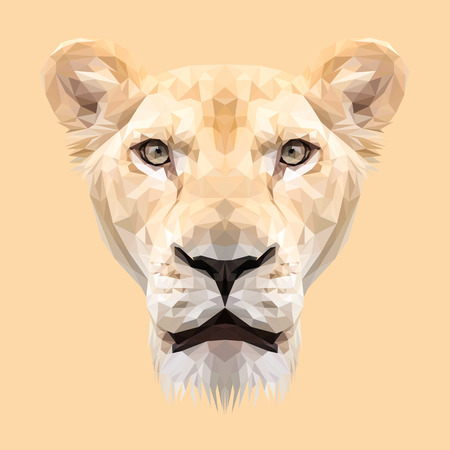 lioness: Lioness animal low poly design. Triangle illustration. Illustration
