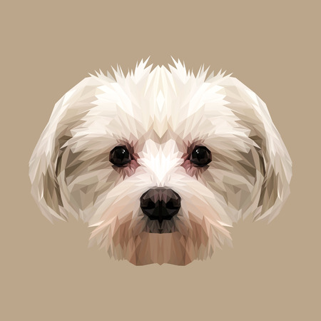 Maltese dog animal low poly design. Triangle vector illustration.