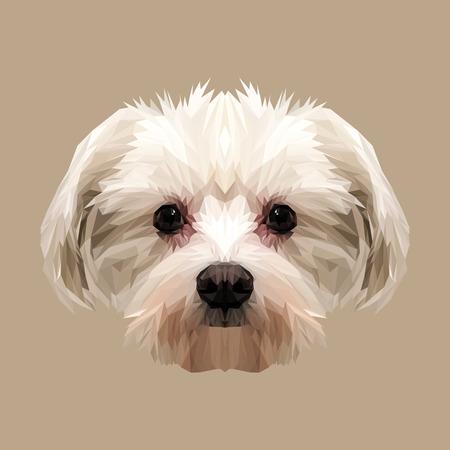 maltese dog: Maltese dog animal low poly design. Triangle vector illustration.