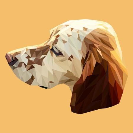English pointer dog animal low poly design. Illustration