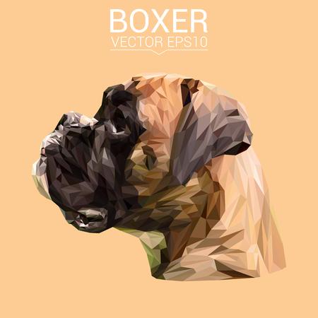 ボクサーの低ポリ デザイン。  イラスト・ベクター素材