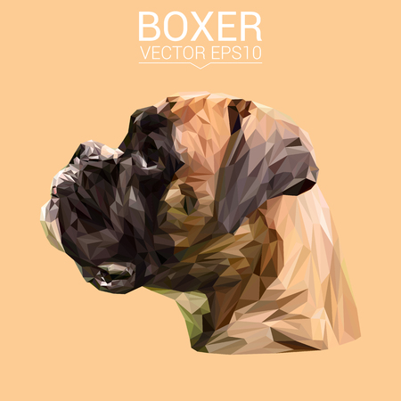 Boxer laag poly ontwerp.