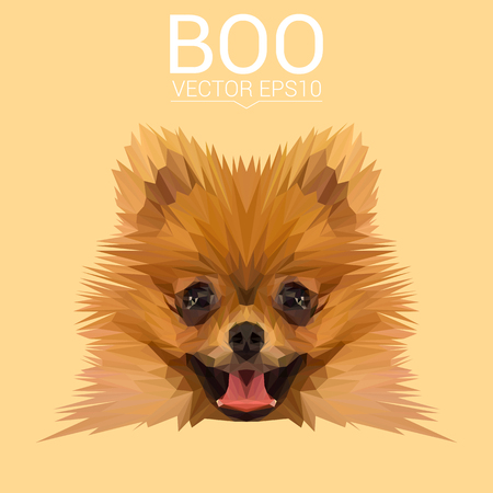 dog: Boo Pomeranian Dog animal low poly design. Triangle vector illustration. Illustration