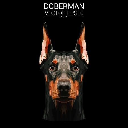 Doberman low poly design.
