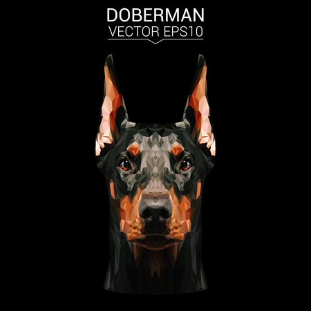 Doberman low poly design.