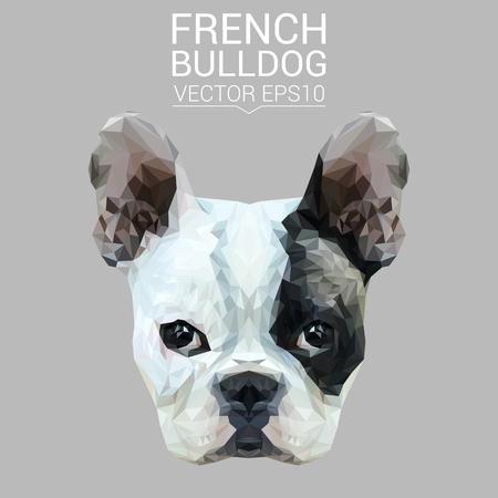 dog: French bulldog low poly design.