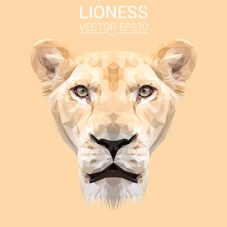 dog: Lioness low poly design. Illustration