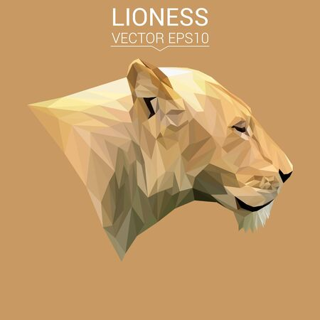 lioness: Lioness cat animal low poly design. Triangle vector illustration.