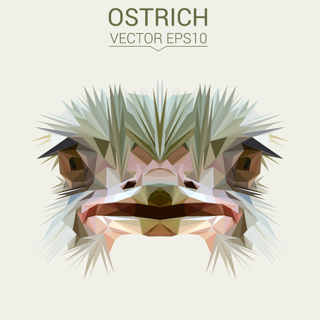 Ostrich low poly design vector illustration.