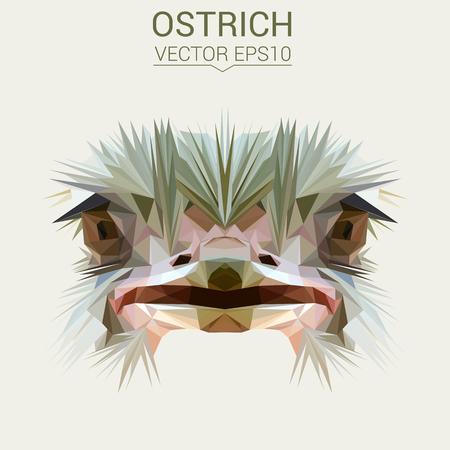 Struisvogel laag poly ontwerp vectorillustratie. Stock Illustratie
