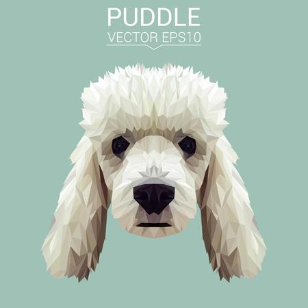 Poodle dog animal low poly design vector illustration.
