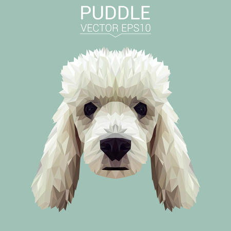 Poodle dog animal low poly design vector illustration.