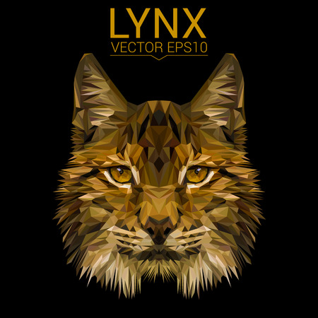 Lynx cat animal low poly design vector illustration.
