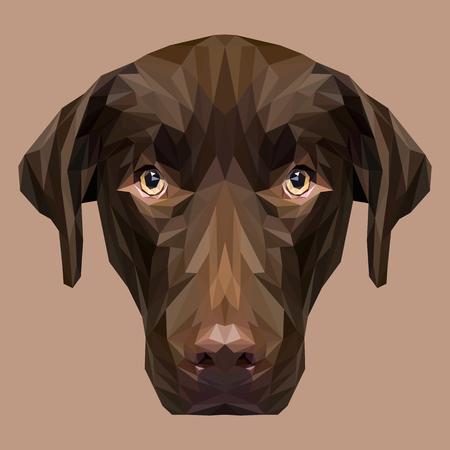 Labrador Retriever low poly design. Triangle vector illustration. 向量圖像