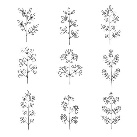 Twigs and leaves. Isolated graceful plants for design. Set of vector illustrations on a white background.