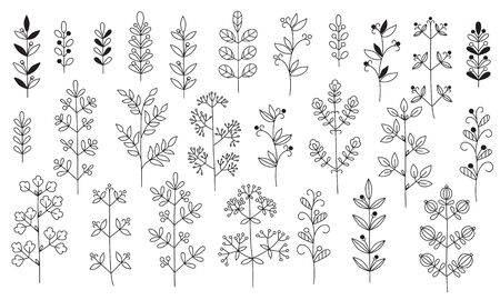Twigs, leaves. Isolated graceful plants for design. Set of black vector illustrations on a white background. Can be used as a coloring book or as design elements for invitations, greetings, decoration