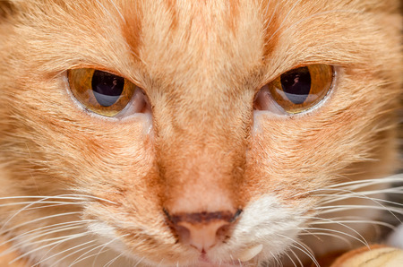 face to face: cat face