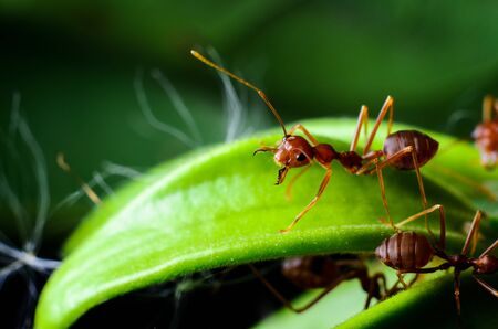 solider: angry ant
