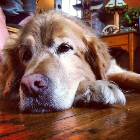 otganimalpets01: Precious dog Stock Photo