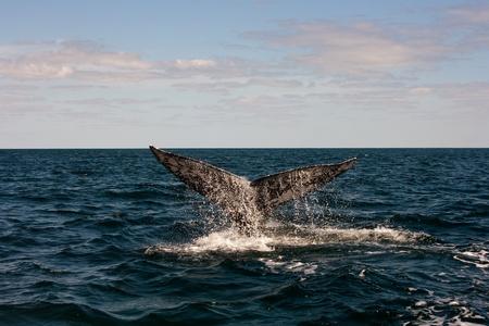 Full Whale